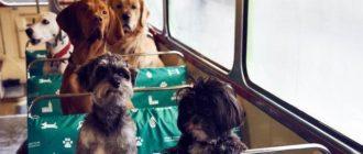 Правила провоза животных в автобусе